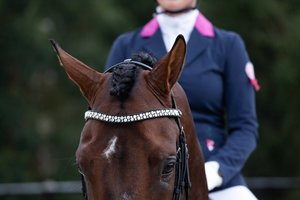 Browband Famous Odessa Double crystal AB