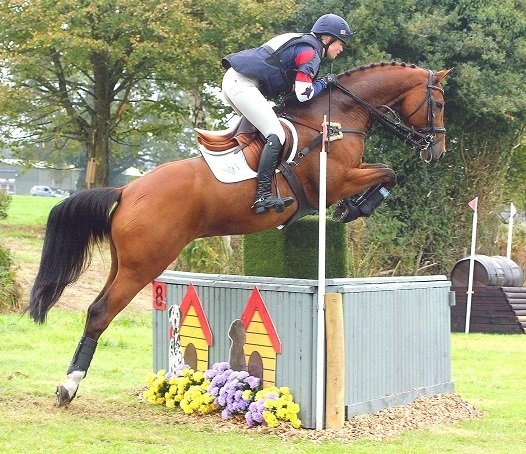 Eventing ruiter Emily Lewellyn (Groot Brittannië) heeft meerdere JUDI frontriemen, zoals Famous Classic tricolore brown, Famous Classic crystal AB, Famous Star crystal AB en Famous Classic colorado gold.