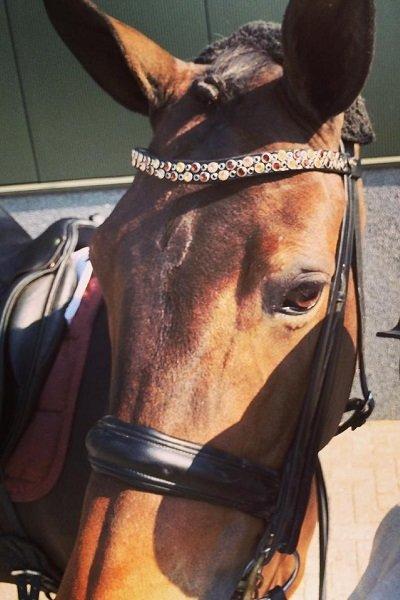 Jessica Leijser (Nederland) heeft gekozen voor JUDI frontriem Odessa Double tricolore brown