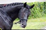Swarovski tricolore black