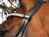 Bridle Classic brown_