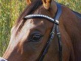 JUDI snaffle bridle Classic white noseband Swarovski browband Famous Classic crystal AB