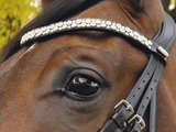 JUDI double bridle Classic white noseband Swarovski browband Famous Odessa Double crystal AB