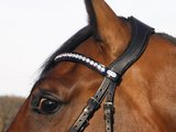 JUDI bridle Anatomic Style Ears browband Famous Classic crystal AB