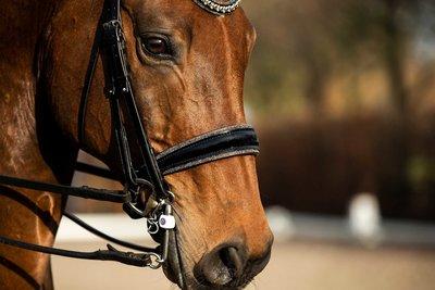 Swarovski bridle gold Browband rose gold