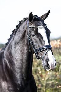 JUDI bridle Classic black padding